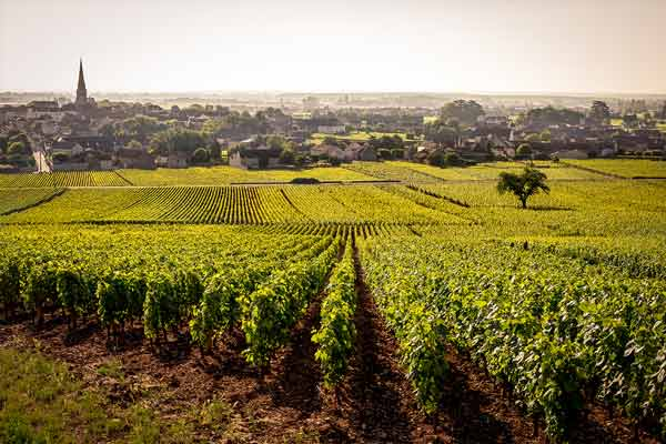 The Meursault vineyards